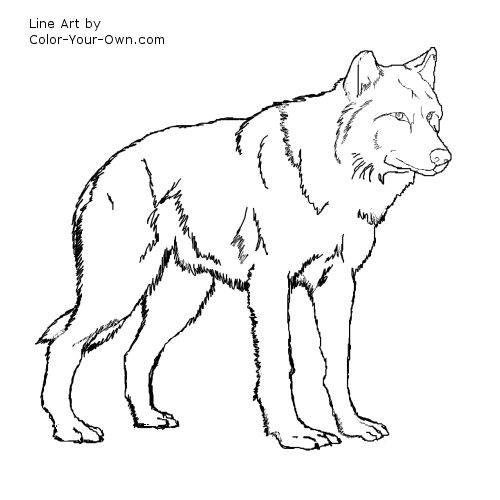 500x500 wolf coloring pages for kids wolf standing coloring page print
