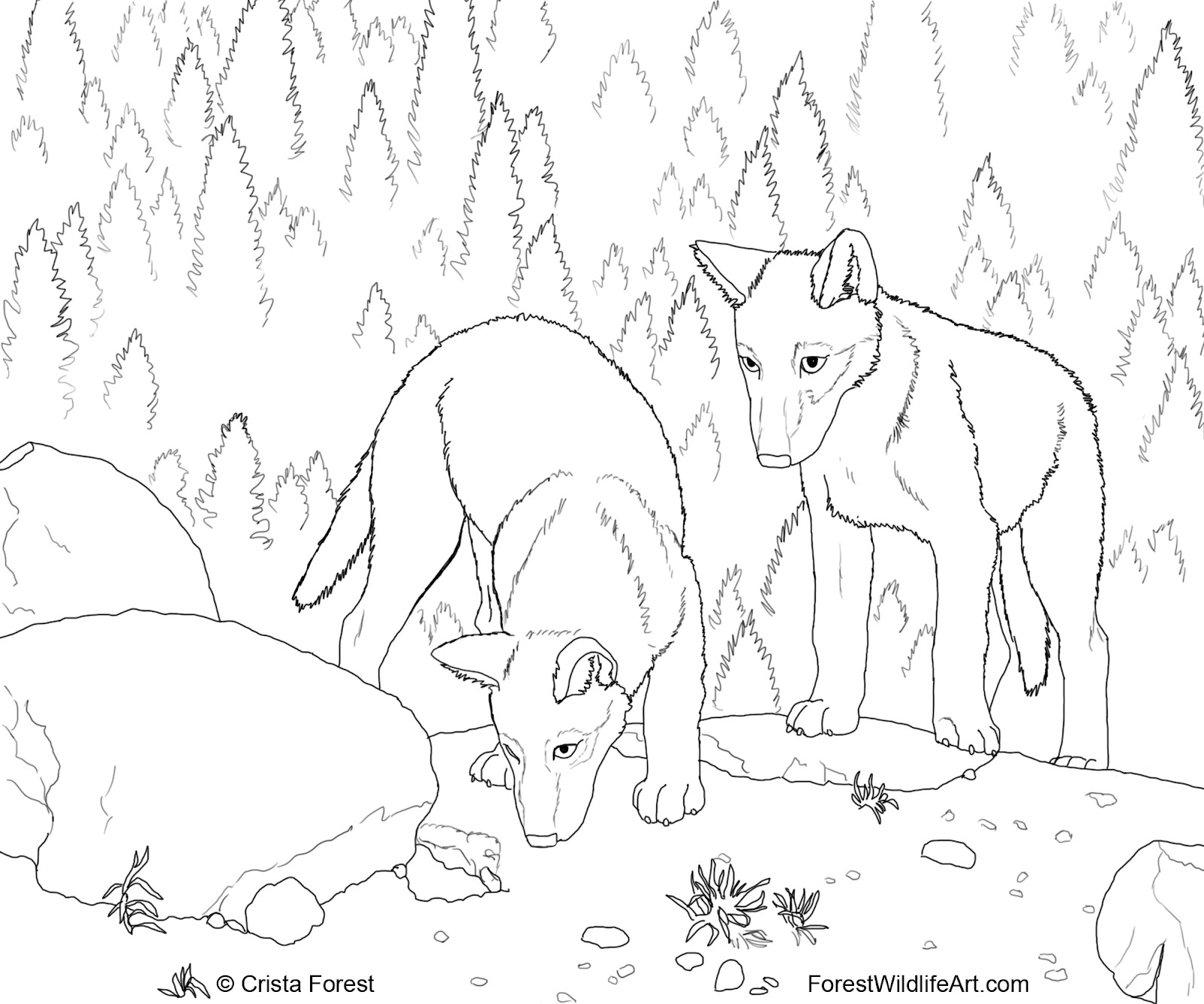 wolf drawing book at getdrawings com free for personal use wolf