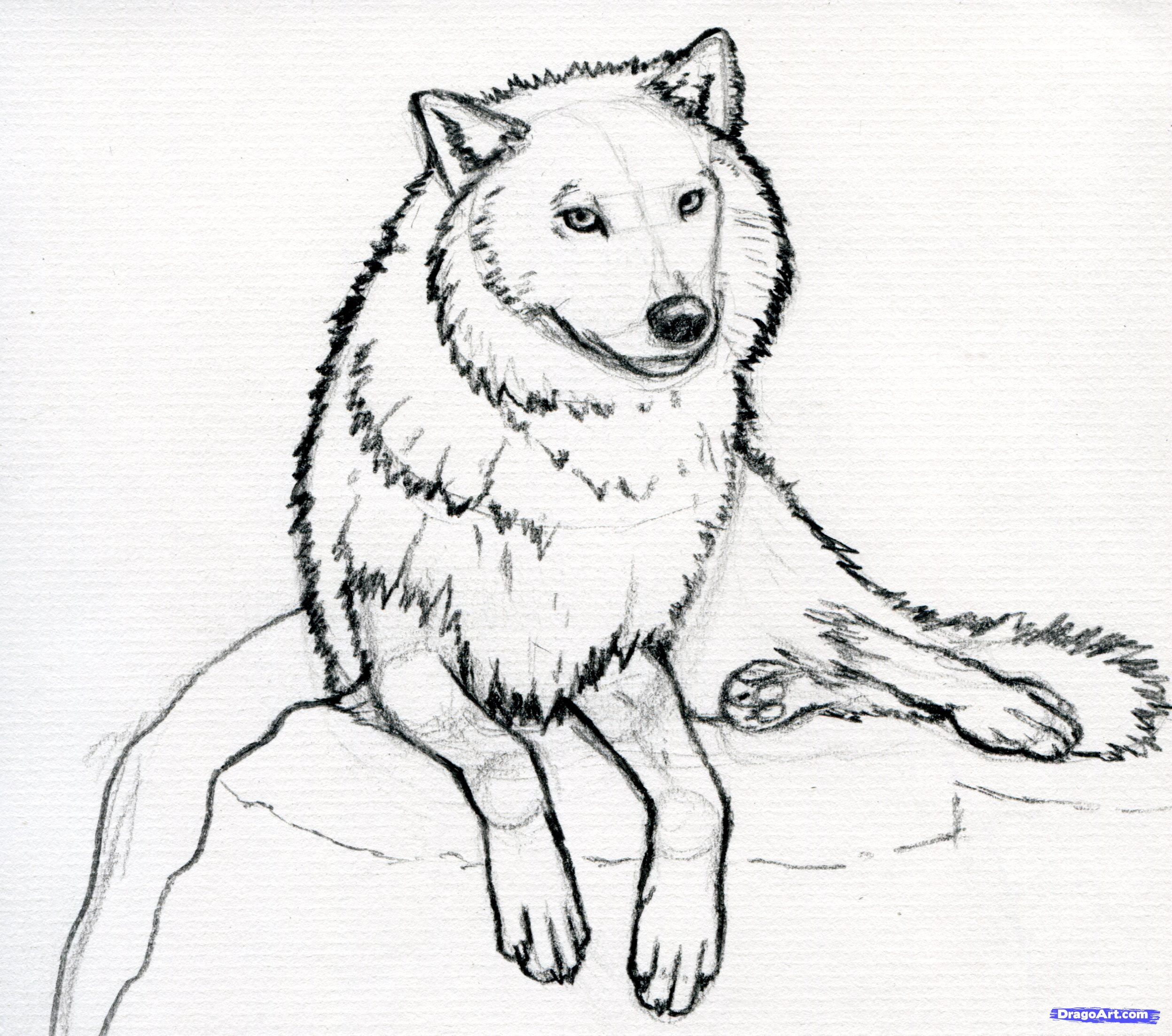 Wolf Drawing Easy At Getdrawings Com Free For Personal Use Wolf