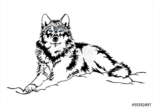 Lineart Wolf Tattoo : Wolf drawing images at getdrawings.com free for personal use