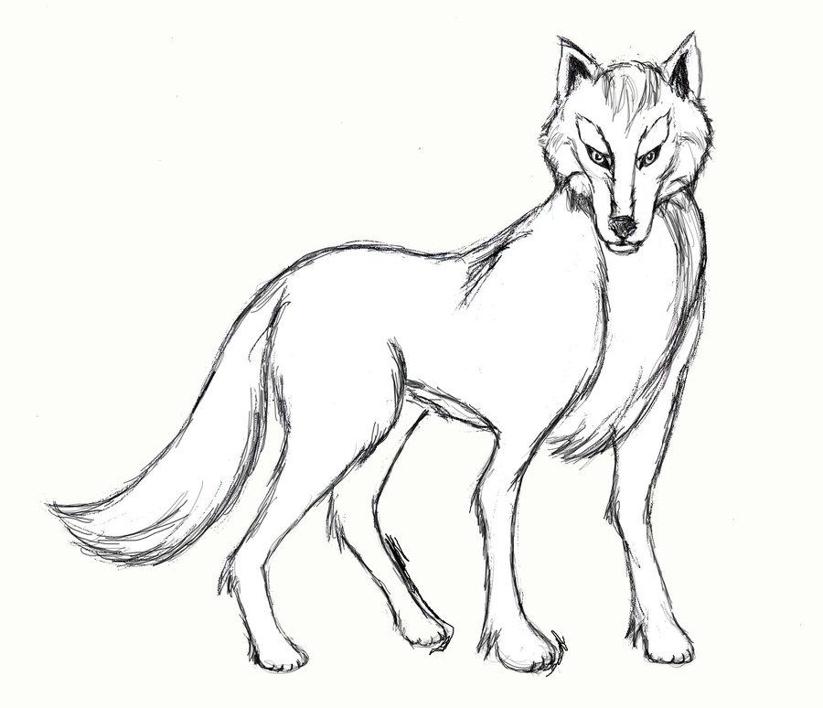 900x774 Drawn Wolf Body