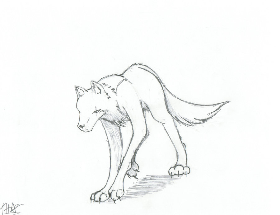 900x691 Arctic Wolf Clipart Easy
