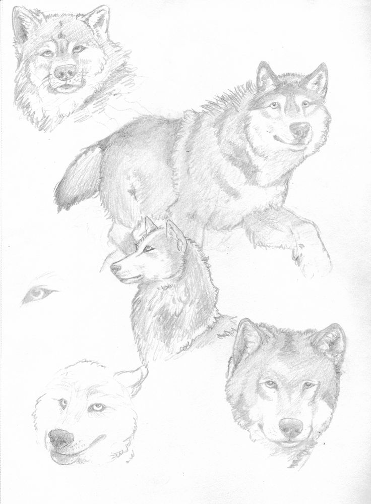 Wolf Eyes Drawing