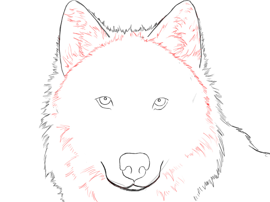 1024x768 Drawing Of A Wolf Face How To Draw An Easy Realistic Wolf Head