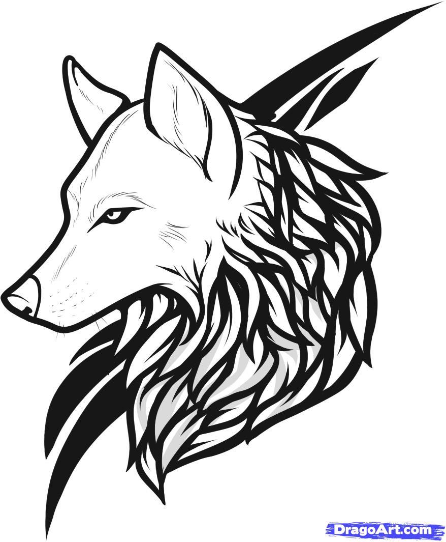 Wolf Head Drawing