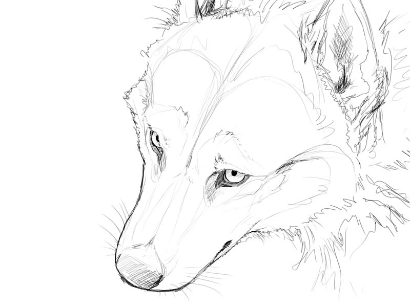 800x600 Simple Wolf Face Drawing
