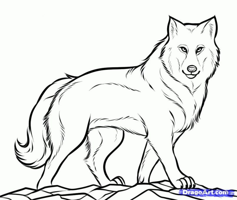 805x679 Drawing Wolf Cartoon Drawing Easy Also Wolf Drawing Easy Step By