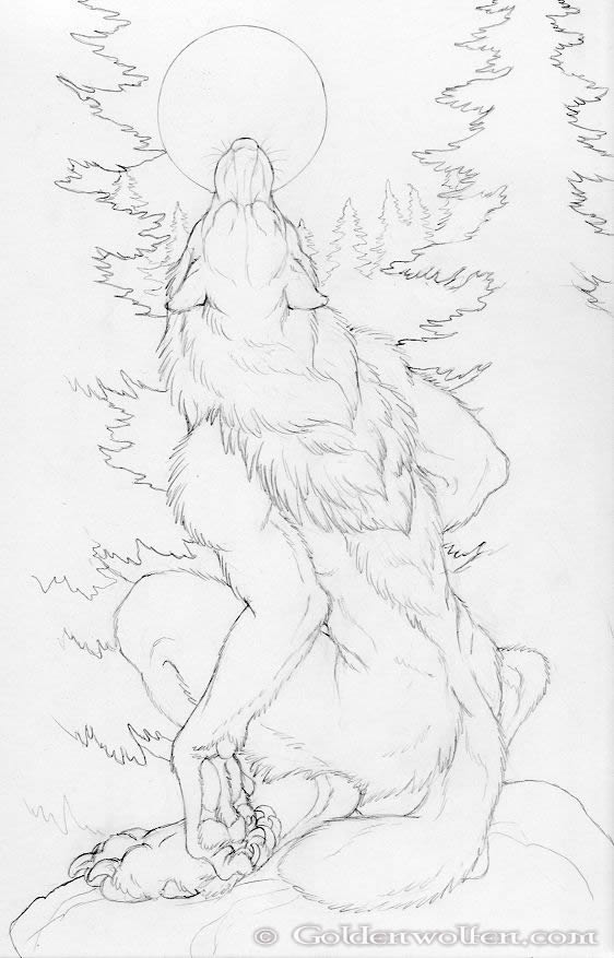 562x877 Moon Howl Drawing By Goldenwolf