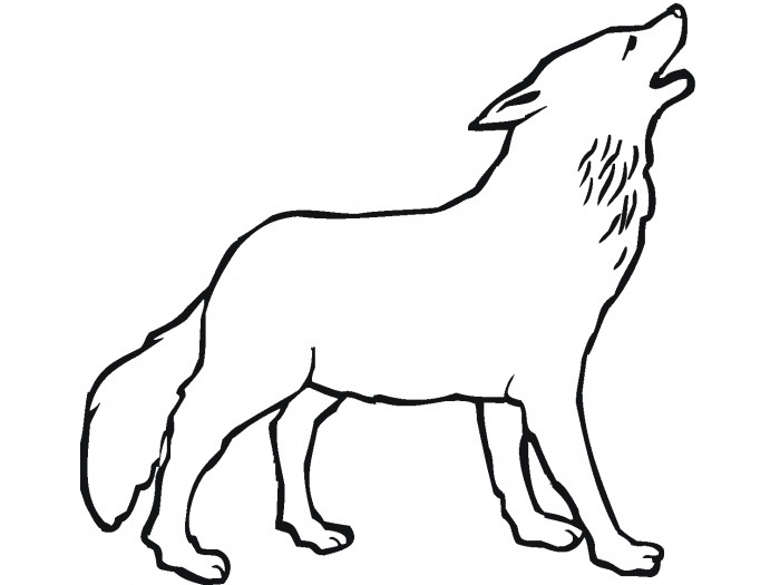 700x525 Drawn Howling Wolf Traceable