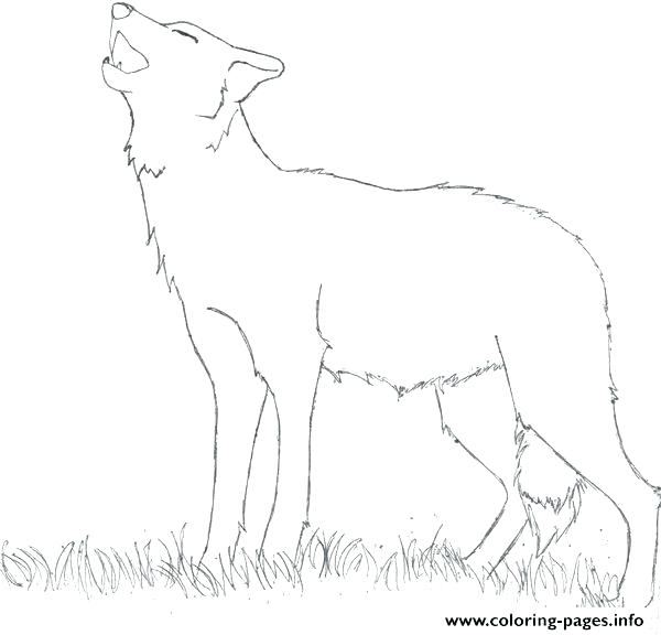 Wolf Howling At The Moon Drawing Step By Step At Getdrawings Com
