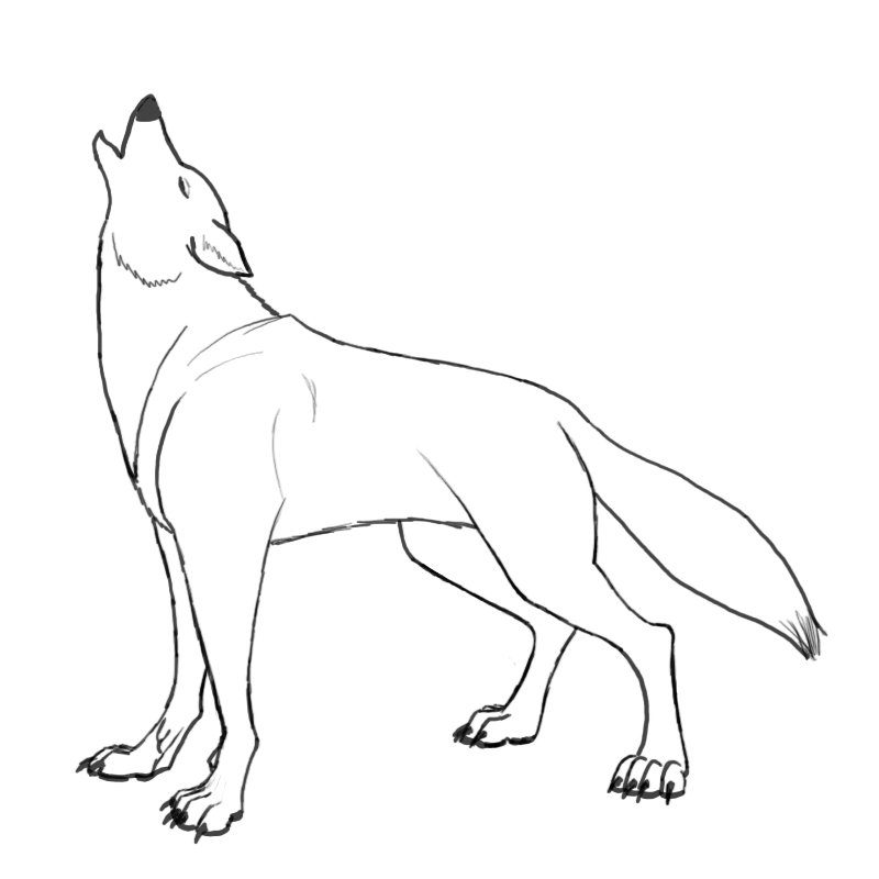 Wolf Howling Drawing