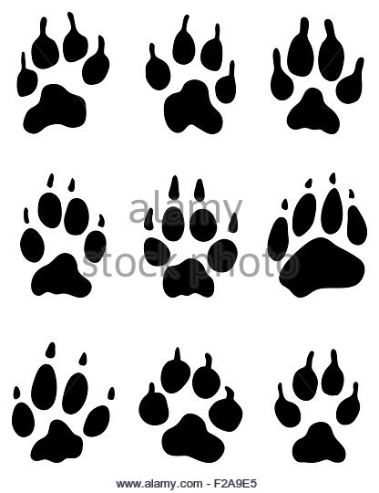 Wolf Paw Print Drawing At Getdrawingscom Free For