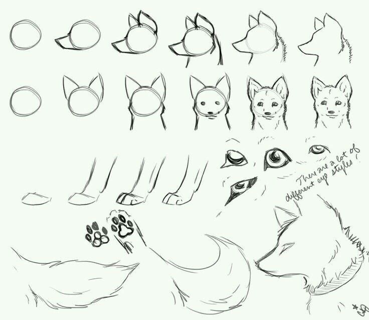 Wolf Paws Drawing