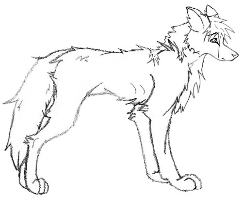 Cute Wolf Pup Drawing