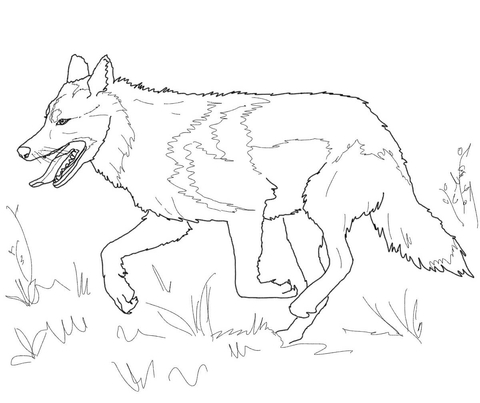 480x403 Running Mexican Grey Wolf Coloring Page Free Printable Coloring