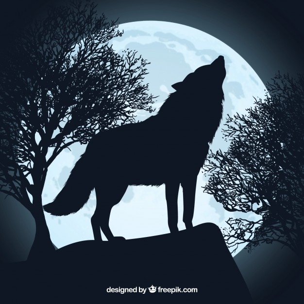 626x626 Howling wolf silhouette and full moon Vector Free Download