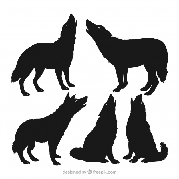 626x626 Pack of wolf silhouettes Vector Free Download