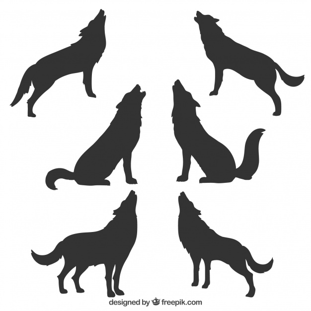 626x626 Wolf Silhouette Vectors, Photos and PSD files Free Download