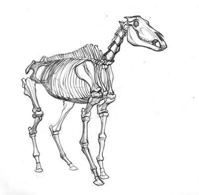 400x393 Horse skeleton by Death The Wolf on DeviantArt