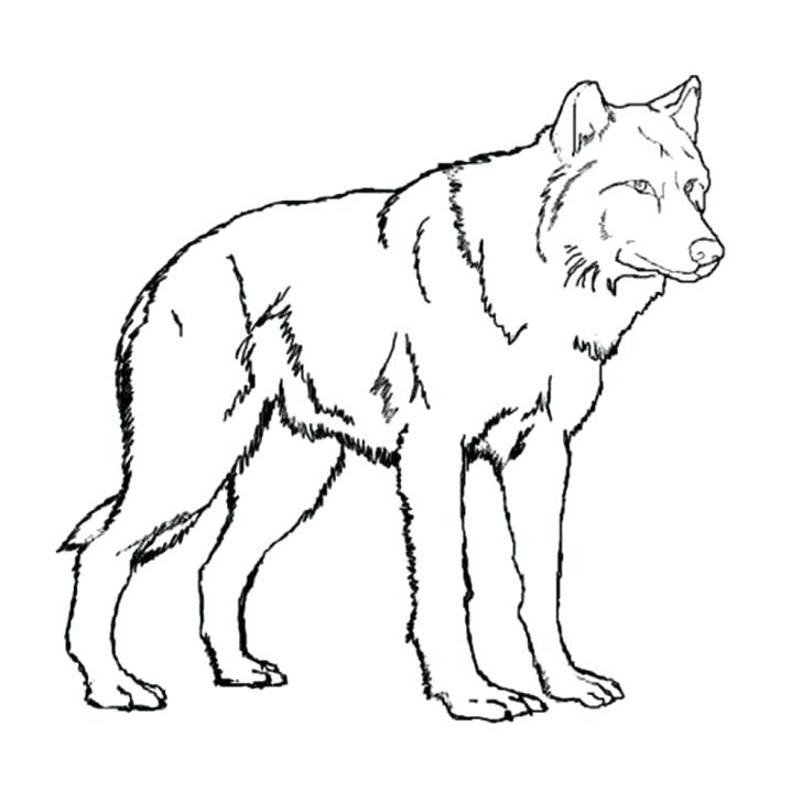 728x728 Minecraft Wolf Coloring Pages Wolf Coloring Pages To Print Online