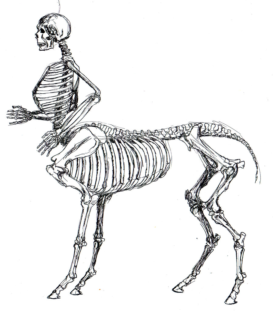 900x1029 Skeletal Centaur Anatomy Study By Tursiart