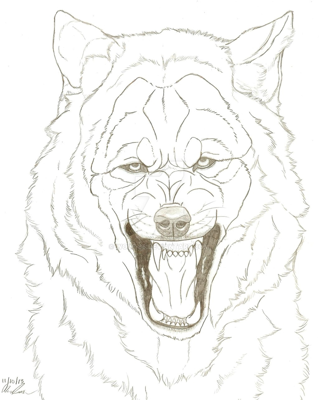 1024x1286 Snarling Wolf Drawing