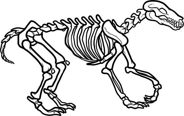 600x377 Awesome Wolf Skeleton Coloring Page