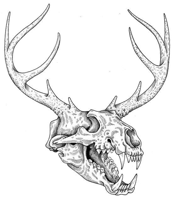 550x634 skull Illustration of Alex Carlson