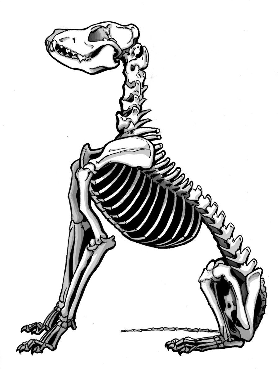 900x1190 Dingo Skeleton By On @ Ink