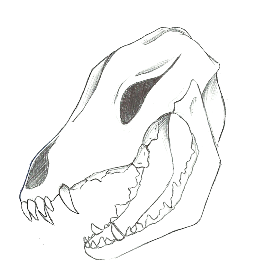 879x909 Wolf Skull Doodle By Renjisbabysister