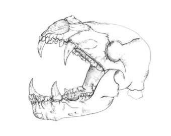 340x270 Wolf Skull Print Etsy