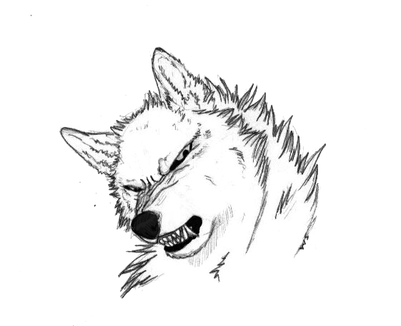 561x457 Snarl Lineart By Wildernessspirits