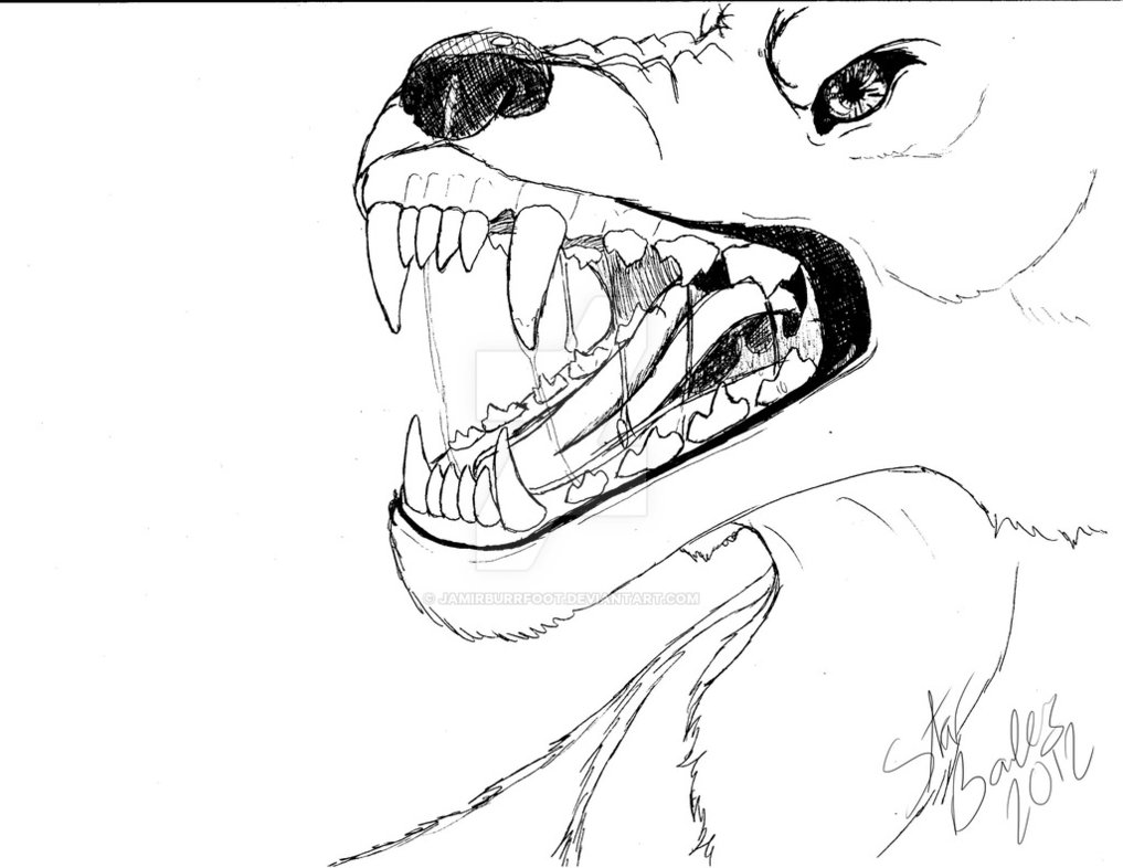 1017x786 Snarling wolf pen drawing by IntergalacticNobody on DeviantArt