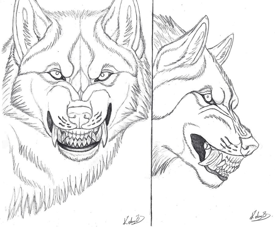 900x742 Werewolf Snarl Referenceline Art By Siosin