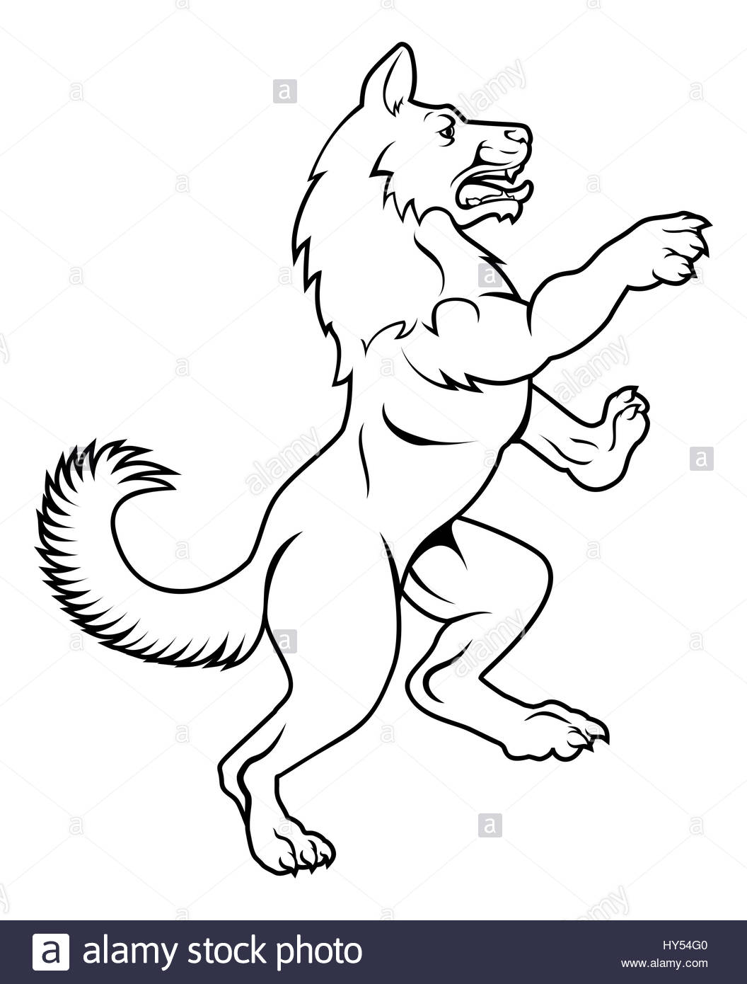 Wolf Standing Drawing
