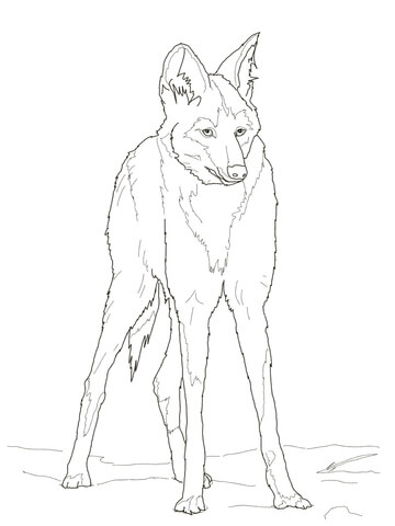 360x480 Reddish Maned Wolf Male Standing Coloring Page