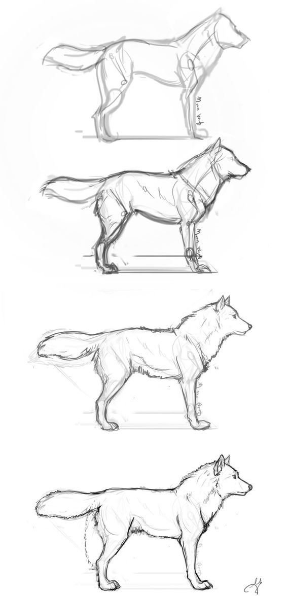 564x1175 Guides To Drawing Wolves Wolf, And Draw