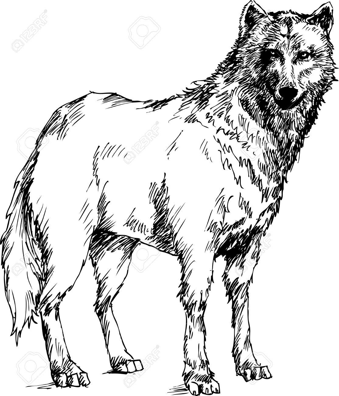 1114x1300 Hand Drawn Wolf Royalty Free Cliparts, Vectors, And Stock