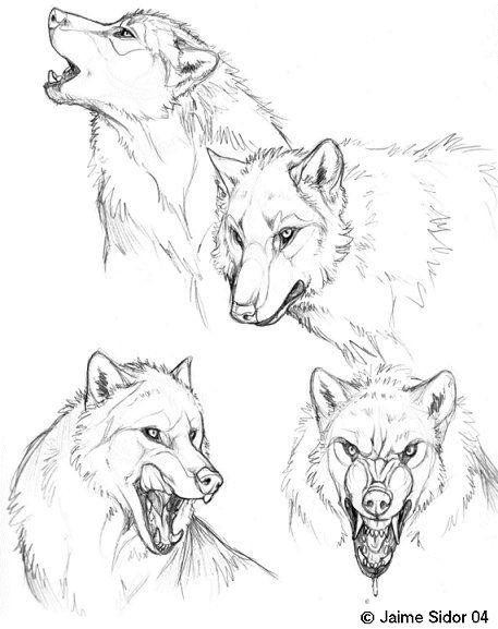 457x577 Wolfcanine Teeth Study By Tiffashy On Animals