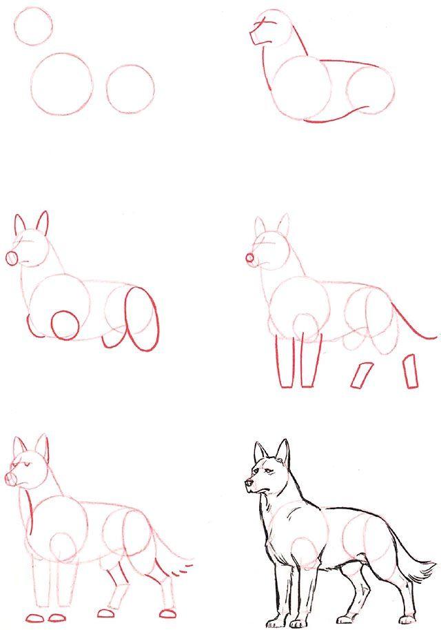 640x913 Kreslenie.sk Ako Kreslit Vlka Wolf Drawing Step