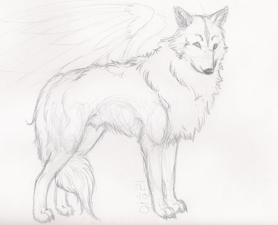 900x729 Easy Wolf Sketches Wolf Sketch By Starlietwolf