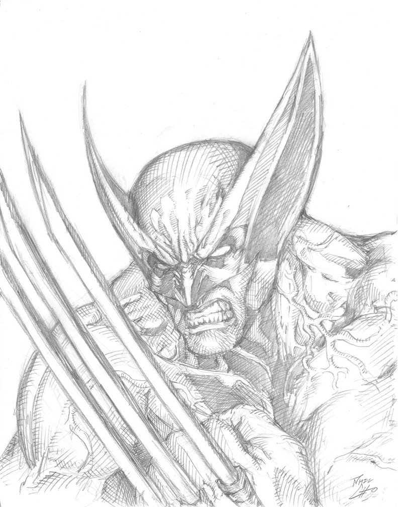 792x1008 Bcc 2013 Wolverine Drawing By Phil Cho