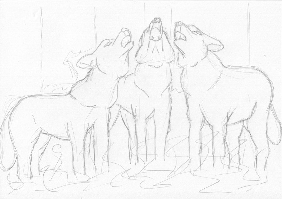 900x636 Sketch Three Wolves Howling By Yukimura Yumiko