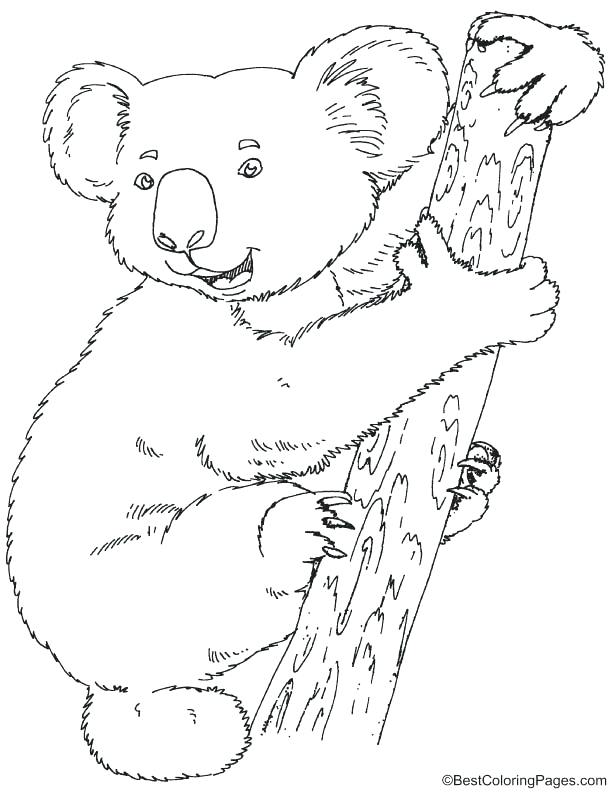 Wombat Drawing at GetDrawings.com   Free for personal use Wombat ...