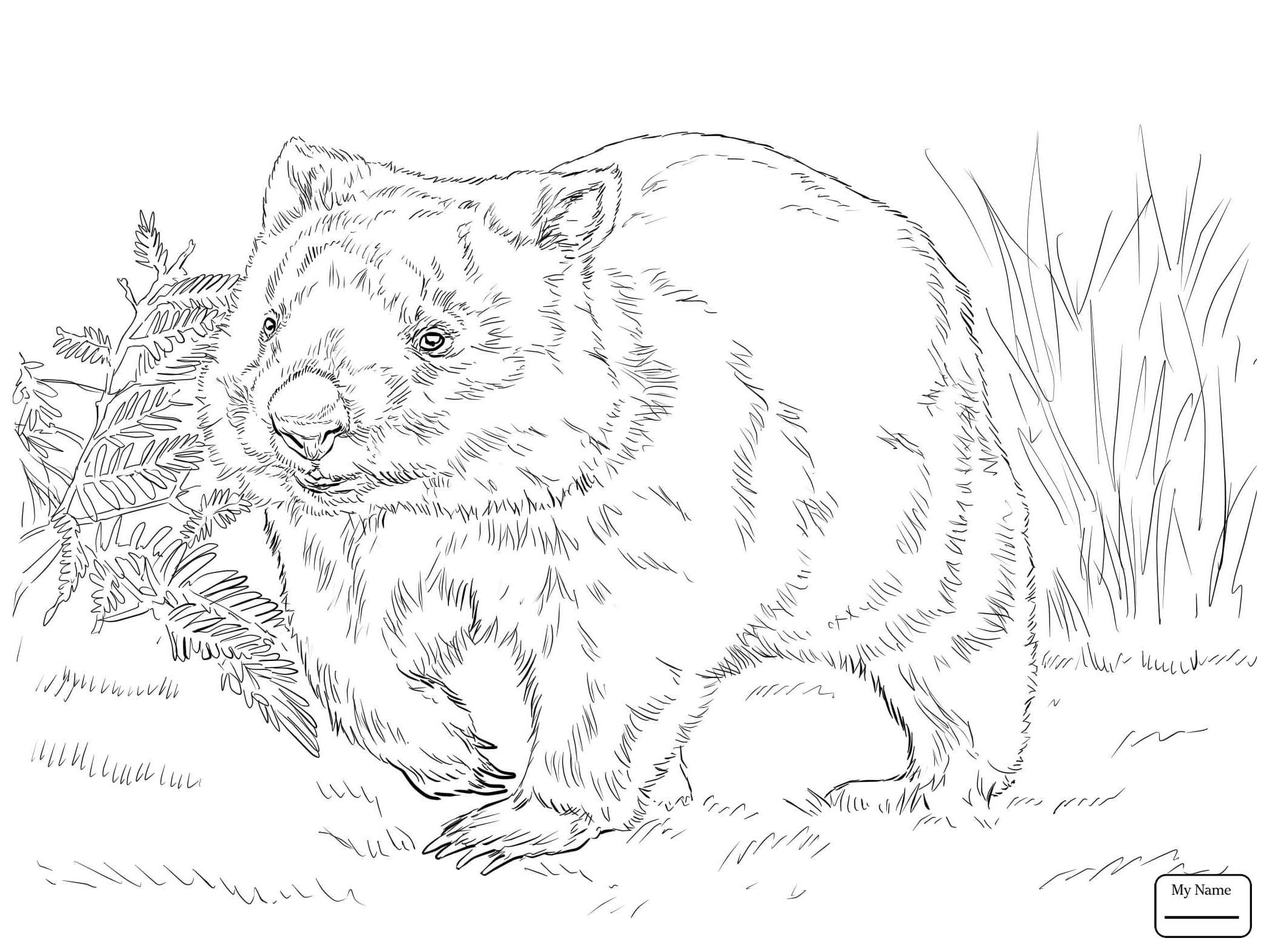 Wombat Drawing At Getdrawings Com Free For Personal Use Wombat Fossil  Prehistoric Animal Coloring Pages 2089x1567