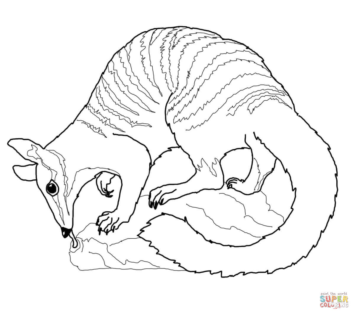 Wombat Drawing At Getdrawings Com Free For Personal Use Wombat