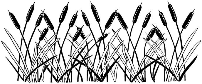 688x288 Cattails Border Unmounted Rubber Stamp Line Drawing