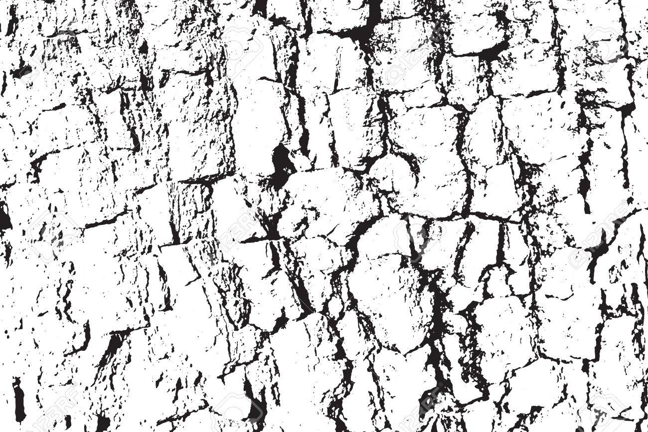 1300x866 A Vector Wood Texture. Abstract Background, Tree Bark. Overlay