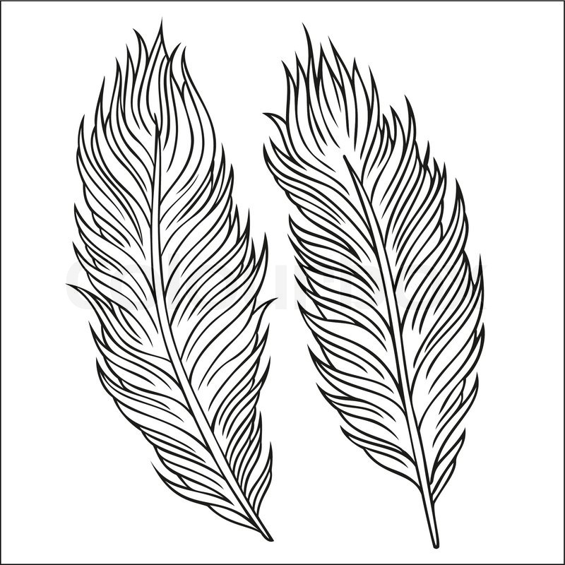 800x800 Drawn Texture Feather