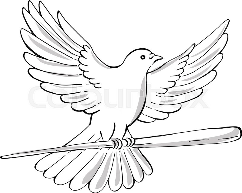800x639 Drawing Sketch Style Illustration Of A Soaring Dove Or Pigeon